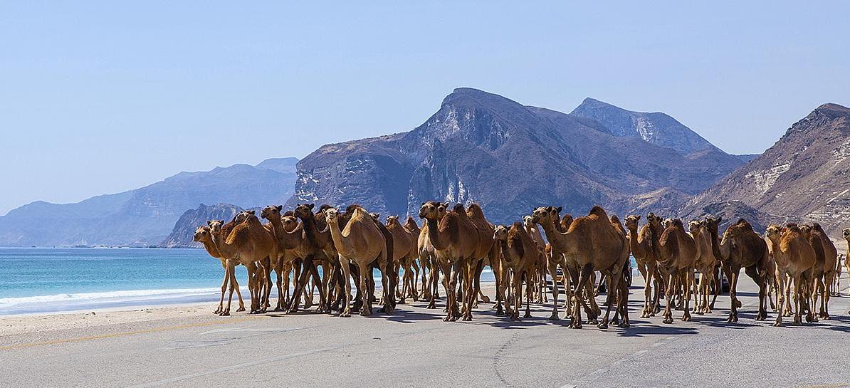 Wiza Oman